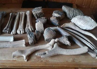 Fossile Knochen Schmuck und Messer